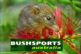 spring adventures for all creatures great and small in Sydney to The Blue Mountains